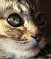 affinita-umano-gatto-test