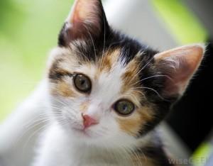 cat-07