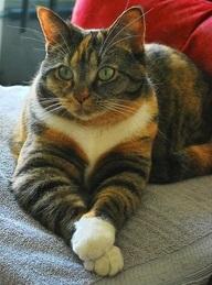 gatto-test-affinità-risultato