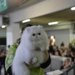 Mostra Internazionale Felina di Genova